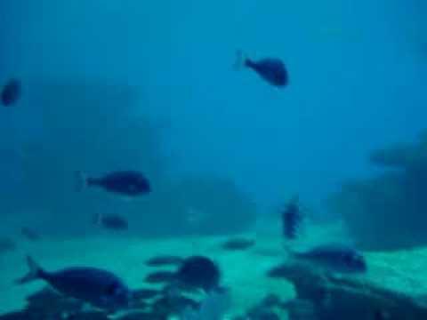 Achtung, hier schwimmt irgend ein Meeresmüll.